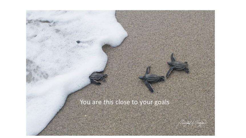 Sea Turtles reaching their goal #10
